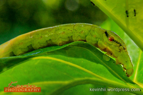 caterpillar-02